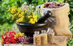 Лечебные травы при фиброзно-кистозной мастопатии
