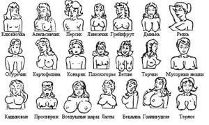 Классификация и виды груди у женщины