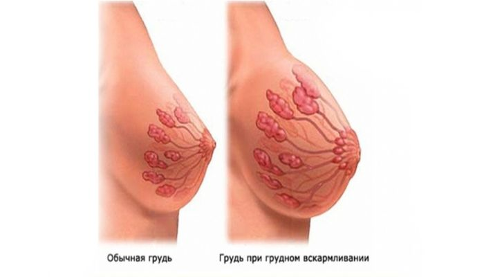 Грудь при грудном вскармливании