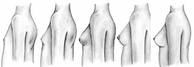 развитие груди